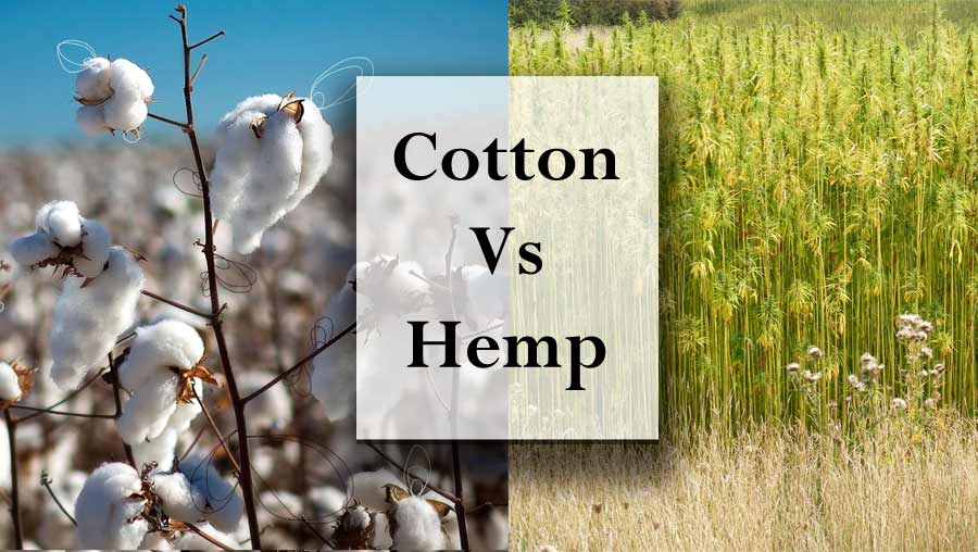 Cotton vs Hemp – The Environmental Impact